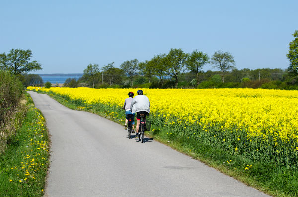 Cykla på Öland